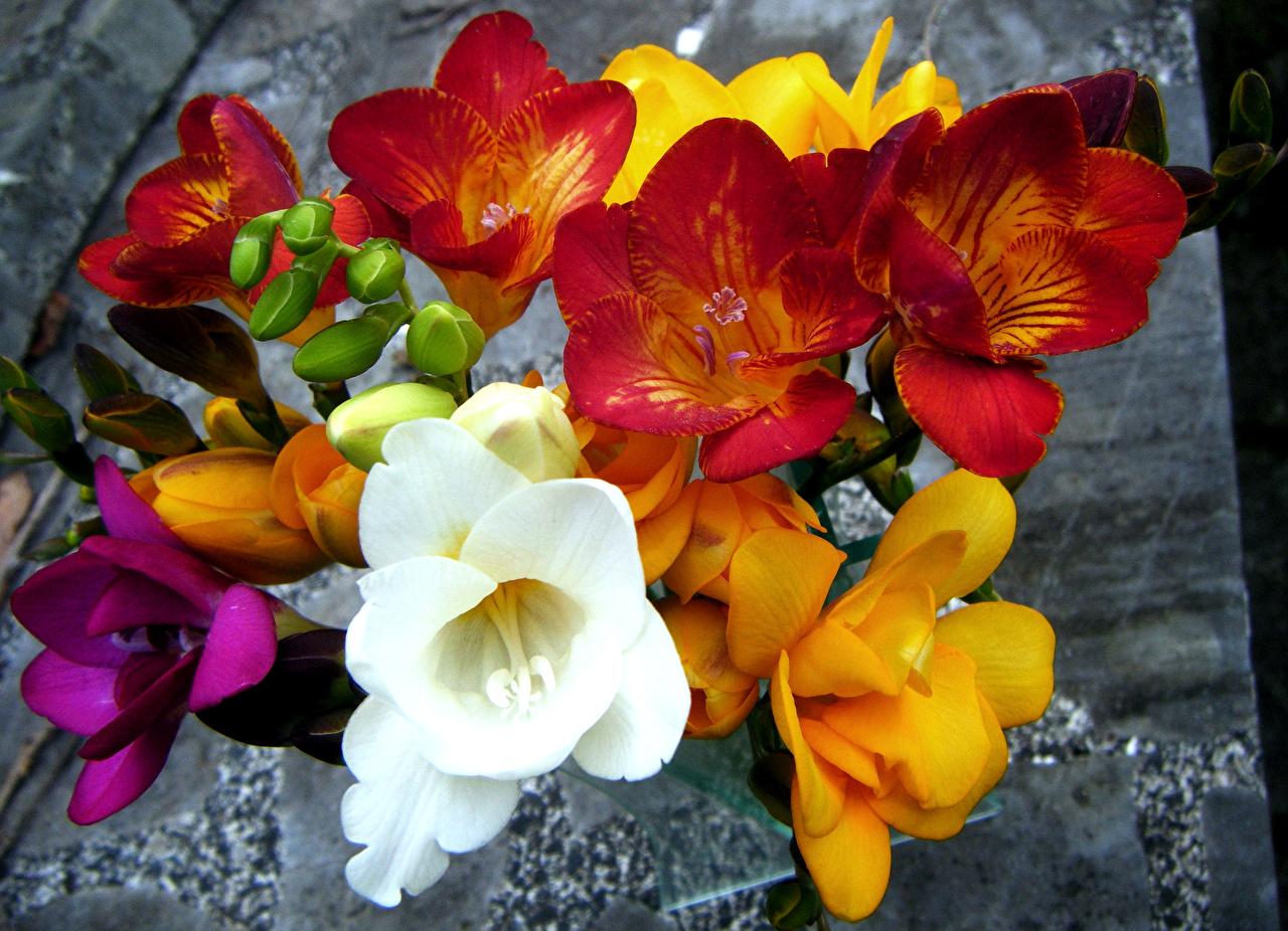 Фото Букеты Цветы Фрезия Крупным планом букет цветок вблизи