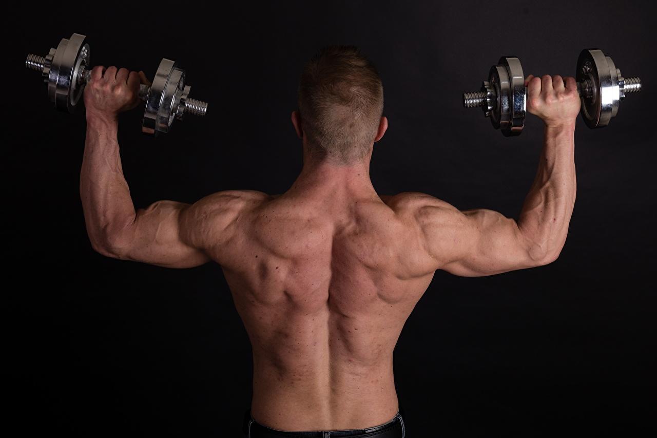Обои для рабочего стола Мышцы мужчина физическое упражнение Спина гантель спортивные Руки вид сзади Черный фон Мужчины мускулы Тренировка тренируется спины Спорт гантеля Гантели гантелей гантелями спортивный спортивная рука Сзади на черном фоне