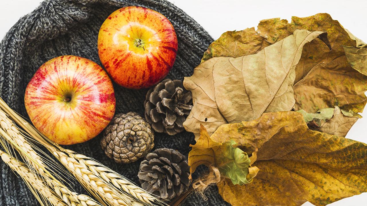 Картинка Листья Осень Яблоки колоски Еда шишка лист Листва осенние Колос колосья колосок Пища Шишки Продукты питания