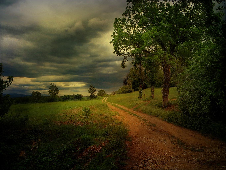 Картинки туч Природа Дороги Деревья Тучи дерево дерева деревьев