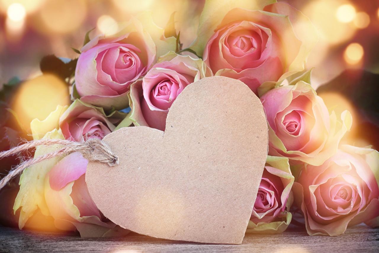 Фотография День святого Валентина Сердце Розы День всех влюблённых серце сердца сердечко роза