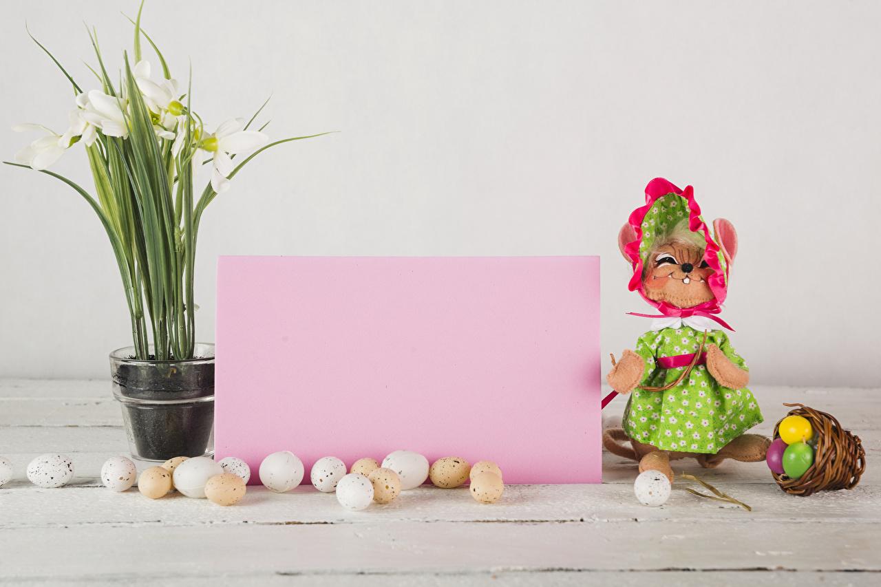 Фотографии Пасха кот Лист бумаги яйцами Корзинка Подснежники Шаблон поздравительной открытки платья коты Кошки кошка яиц Яйца яйцо корзины Корзина Галантус Платье