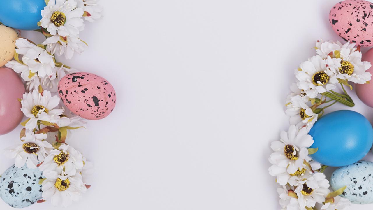 Фотография Пасха яйцо Хризантемы белым фоном яиц Яйца яйцами Белый фон белом фоне