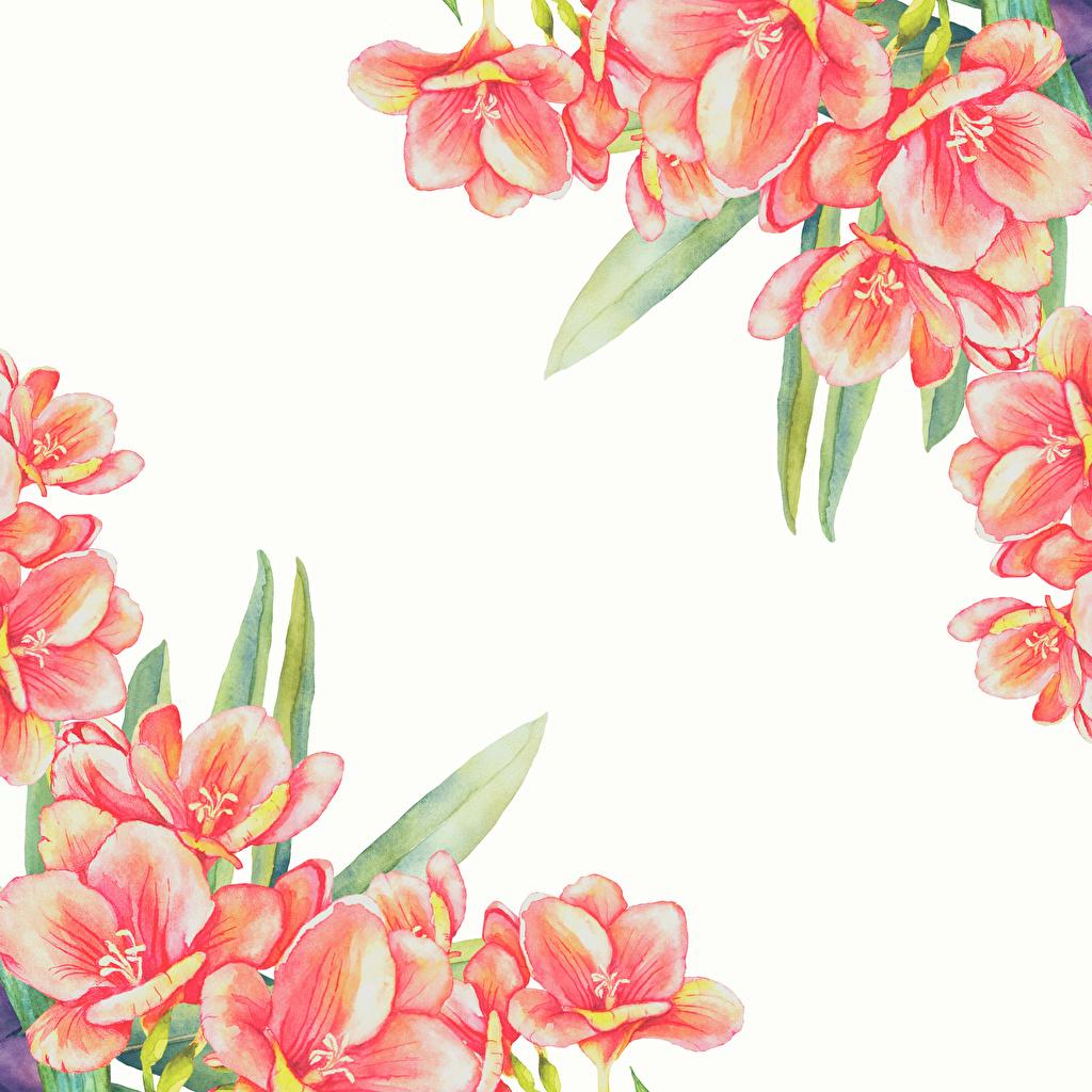 Картинки Цветы Шаблон поздравительной открытки Белый фон Рисованные цветок белом фоне белым фоном