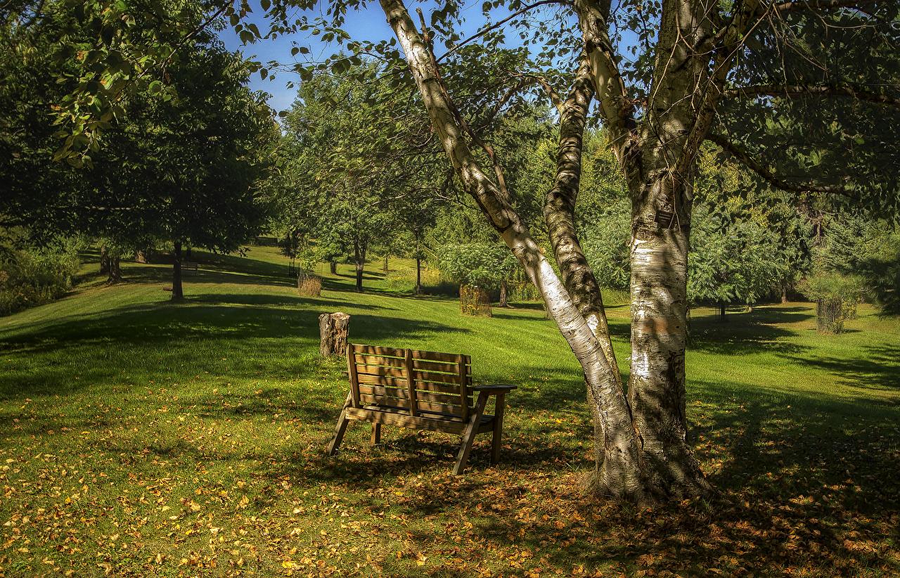 Картинка Листья Природа осенние парк Ствол дерева Скамья деревьев лист Листва Осень Парки Скамейка дерево дерева Деревья