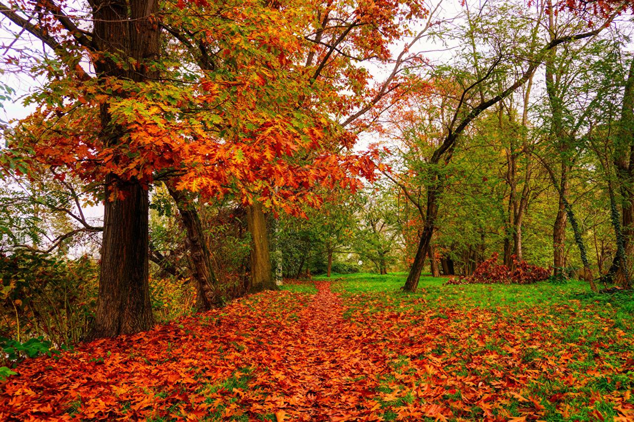 Фото Листья Дуб осенние Природа Деревья лист Листва Осень дерево дерева деревьев