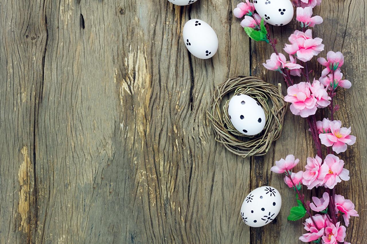 Картинки Пасха Яйца Цветы Шаблон поздравительной открытки яиц яйцо яйцами цветок