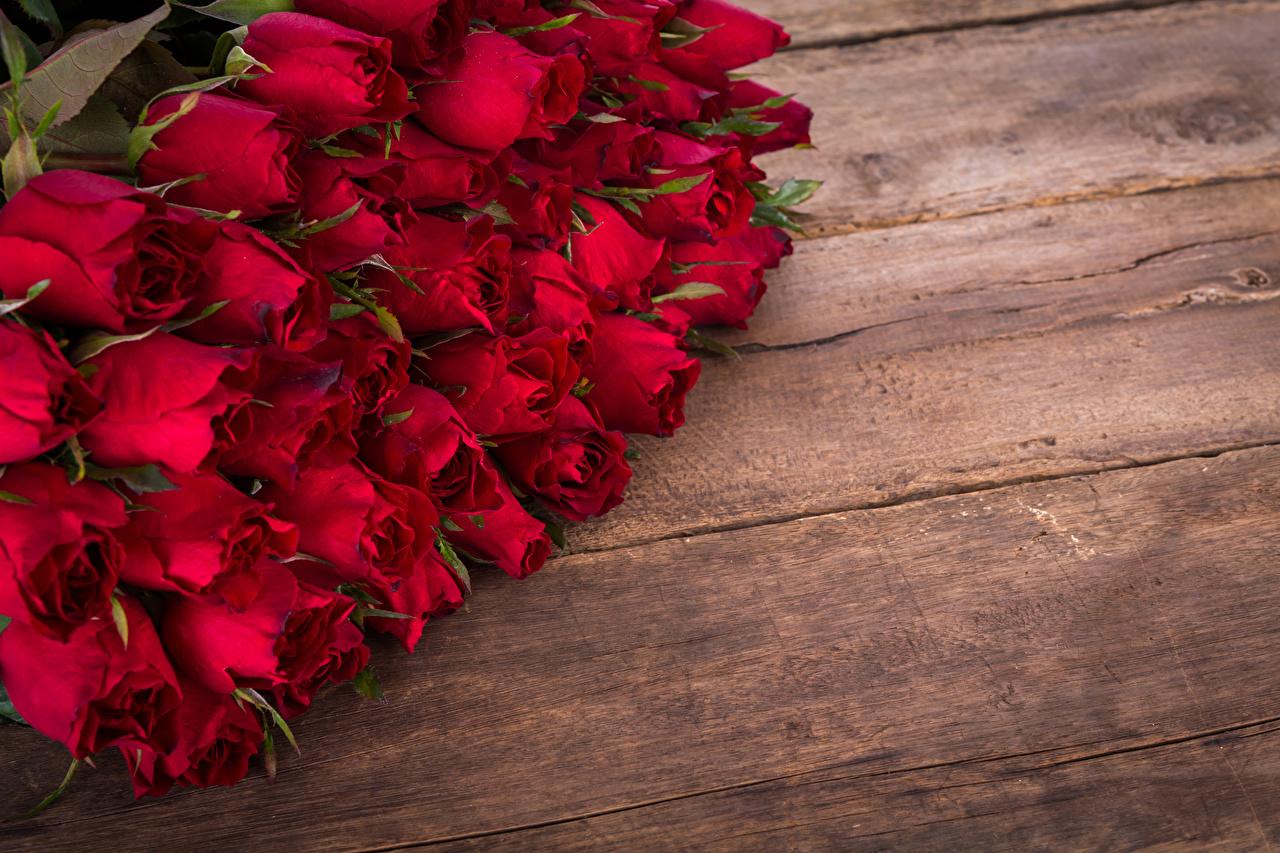 Обои цветок, красная. Цветы foto 19