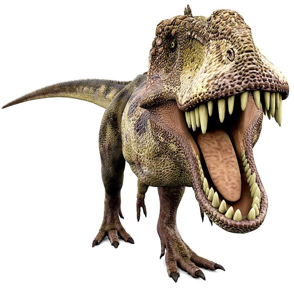 Фото Тираннозавр рекс Динозавры looking for food 3д Зубы злость животное Древние животные динозавр 3D Графика злой Оскал рычит Животные