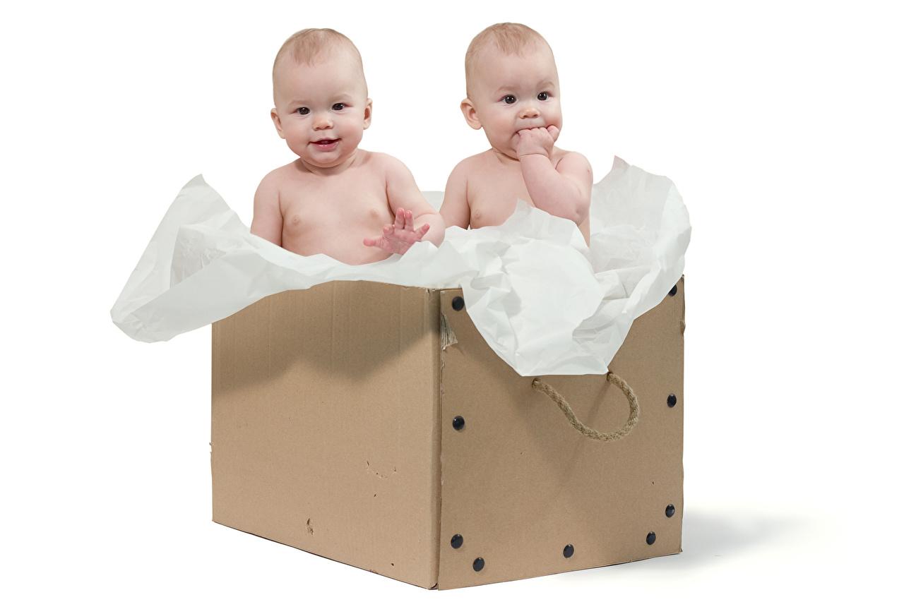 Фото младенец ребёнок Двое коробки Белый фон младенца Младенцы грудной ребёнок Дети 2 два две вдвоем Коробка коробке белом фоне белым фоном