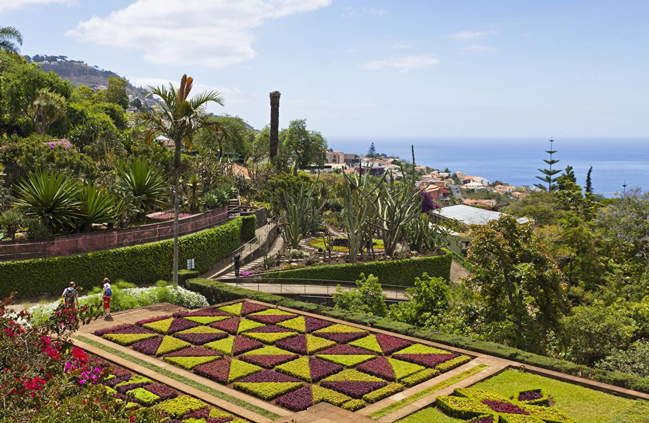 Фотографии Португалия Botanical garden Funchal Madeira Природа Сады Пальмы Кусты Ландшафтный дизайн