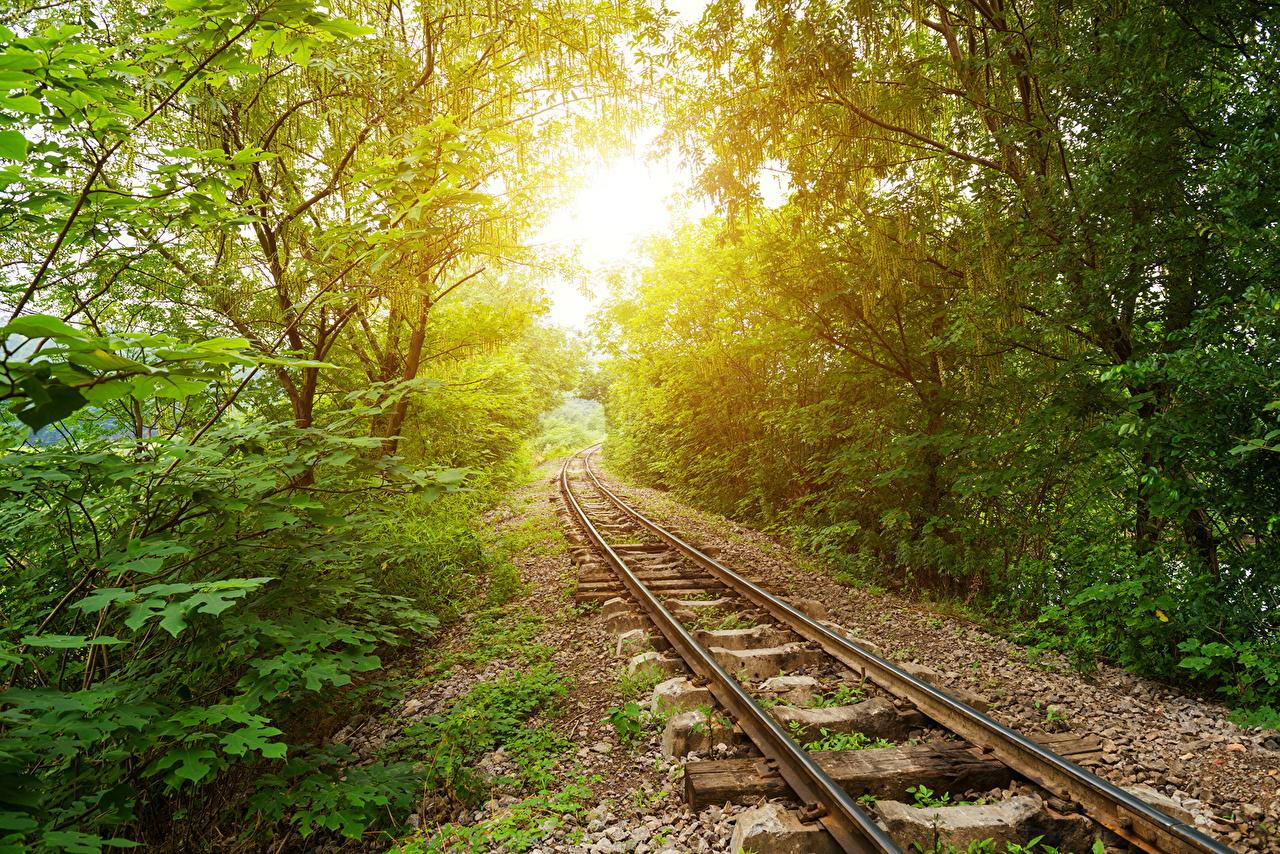 Фотографии Лучи света Природа Железные дороги дерева дерево Деревья деревьев