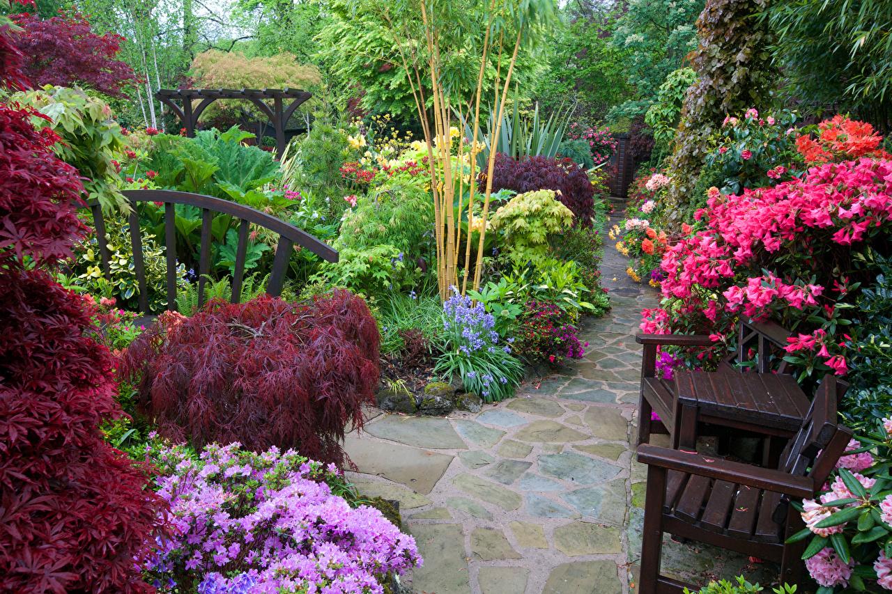 Картинка Англия Walsall Garden Природа Сады Стулья Рододендрон кустов стул Кусты