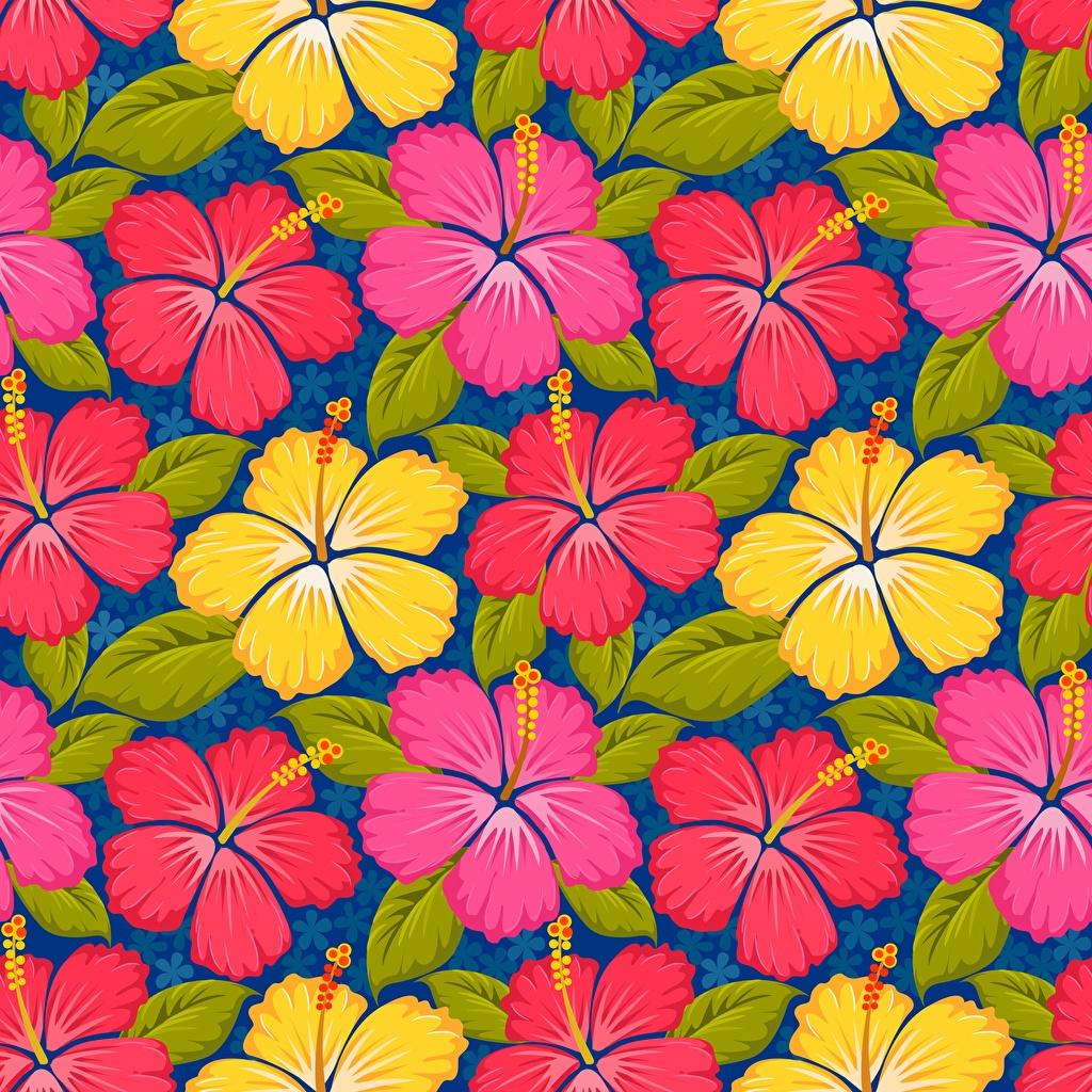 Картинки Текстура цветок Гибискусы Рисованные Цветы