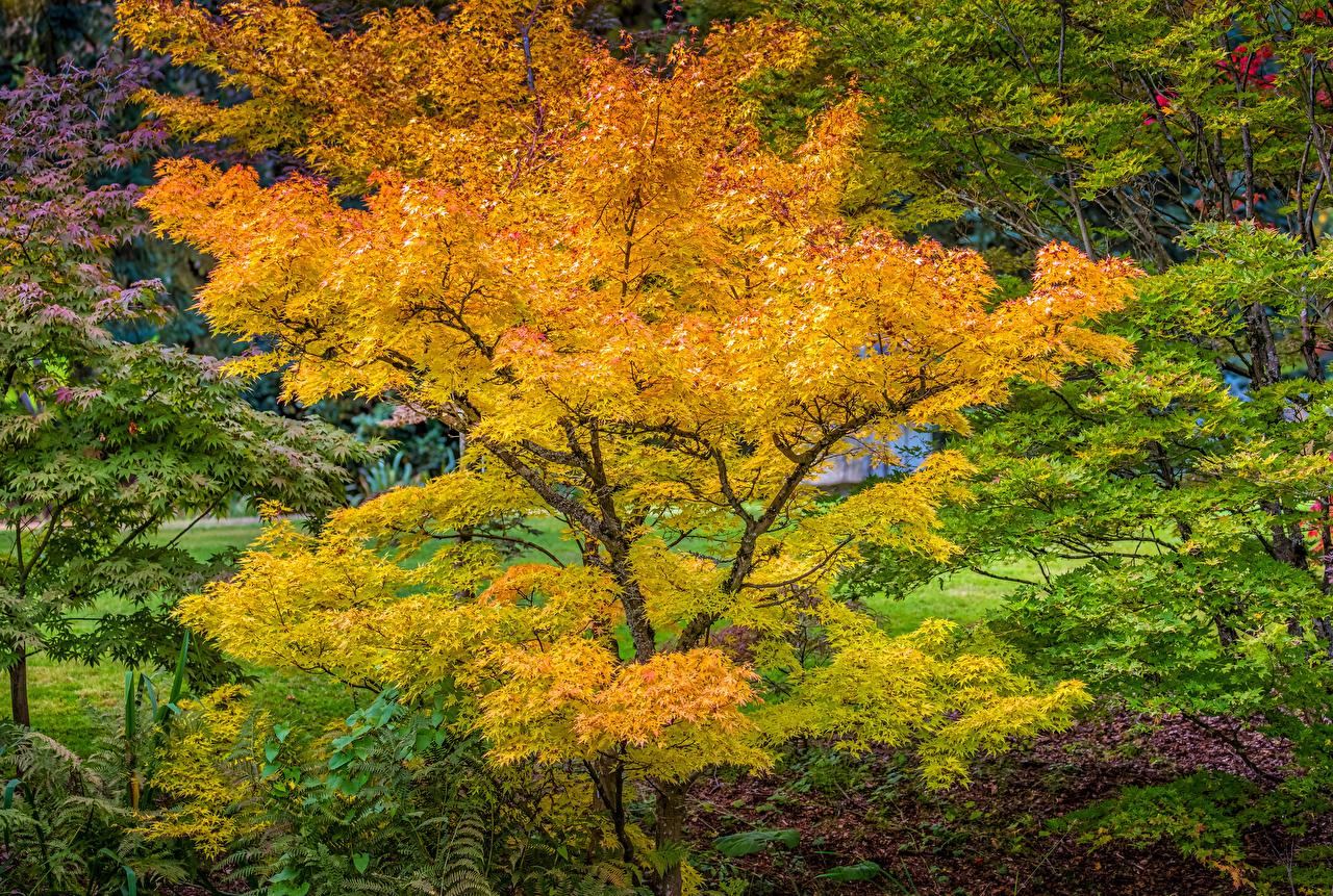 Обои для рабочего стола Ванкувер Канада VanDusen Botanical Garden Осень Природа Парки дерева осенние парк дерево Деревья деревьев