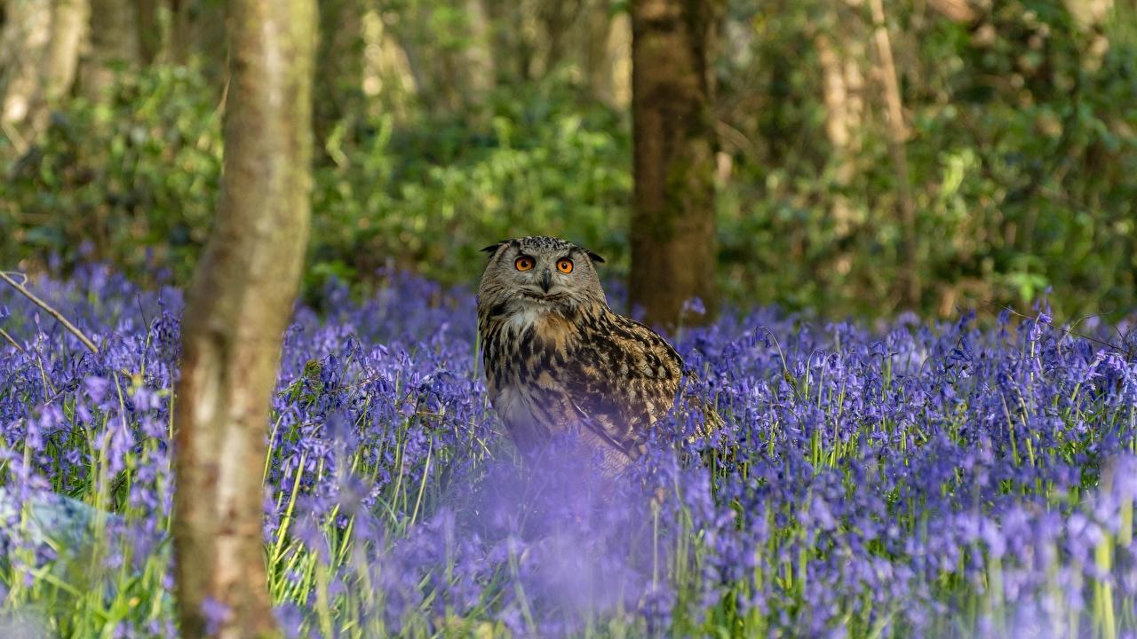 Фотография Филин птица Совообразные Животные совы сова Птицы животное