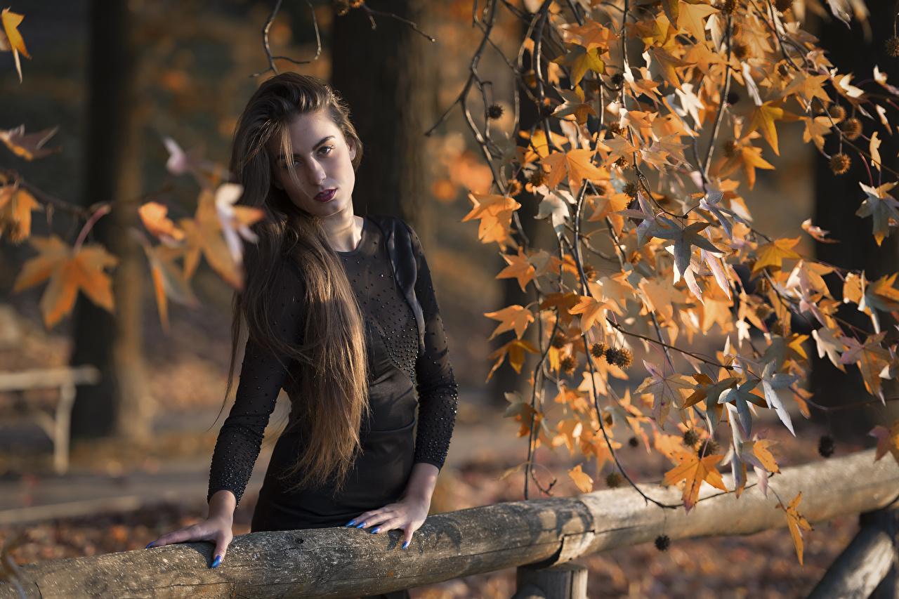 Обои для рабочего стола Листья шатенки Federica Волосы Девушки Руки ветвь Взгляд платья лист Листва Шатенка волос девушка молодая женщина молодые женщины рука Ветки ветка на ветке смотрит смотрят Платье