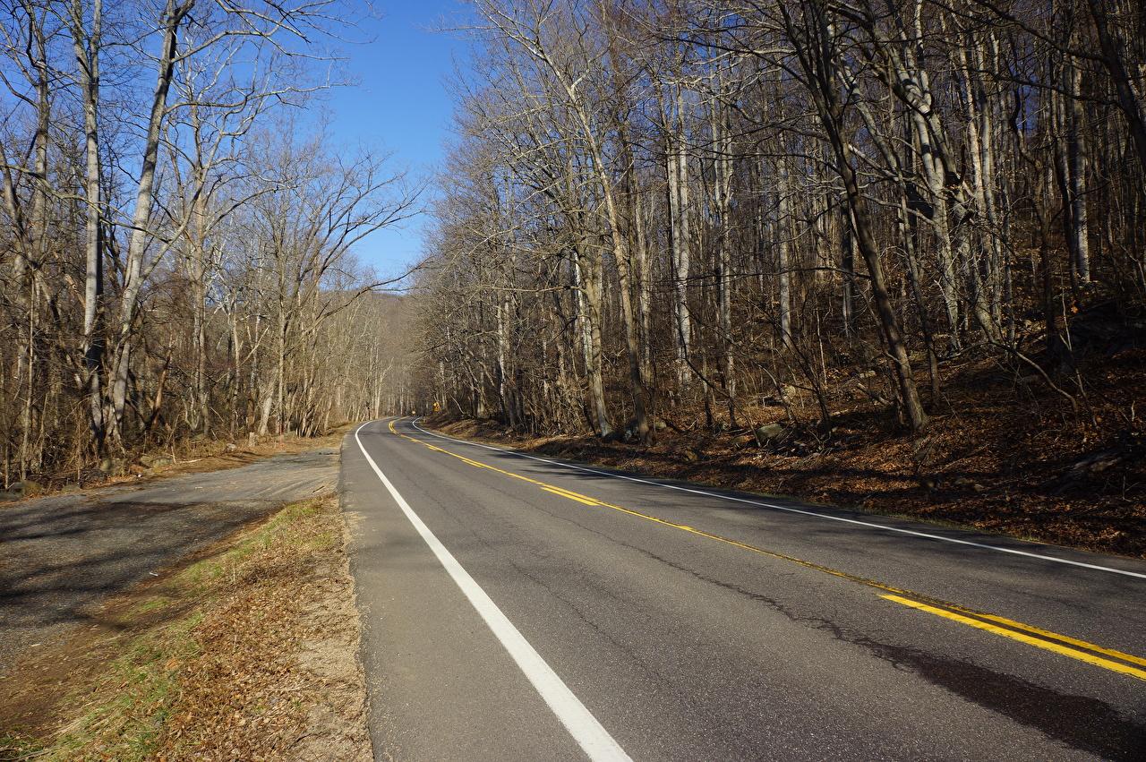 Картинки штаты Shenandoah National Park, Virginia Природа осенние Дороги Асфальт Деревья США Осень