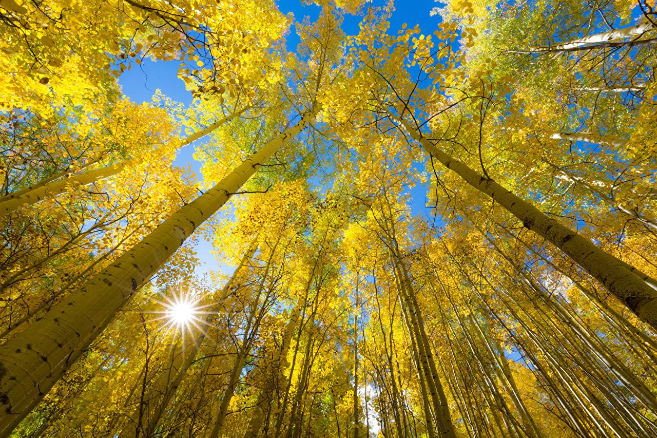 Фотография Лучи света осенние Природа лес дерево Осень Леса дерева Деревья деревьев