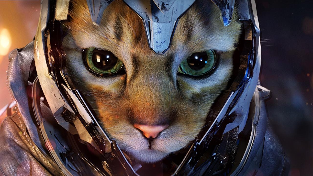 Фотографии коты в шлеме Фэнтези морды Взгляд животное кот Кошки кошка Шлем шлема Фантастика Морда смотрит смотрят Животные