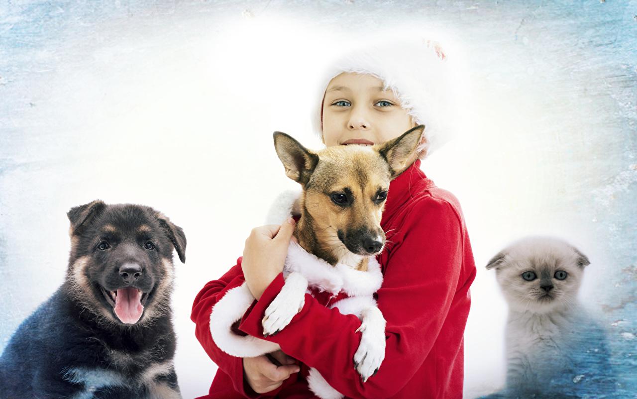 Фотография Собаки мальчишка Новый год Дети Взгляд животное собака мальчик Мальчики мальчишки Рождество ребёнок смотрит смотрят Животные