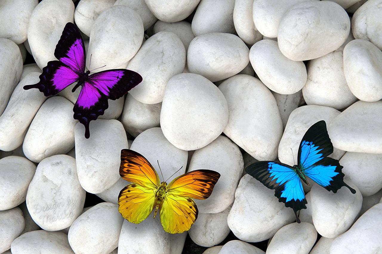 Фотографии Бабочки Камни Трое 3 Животные