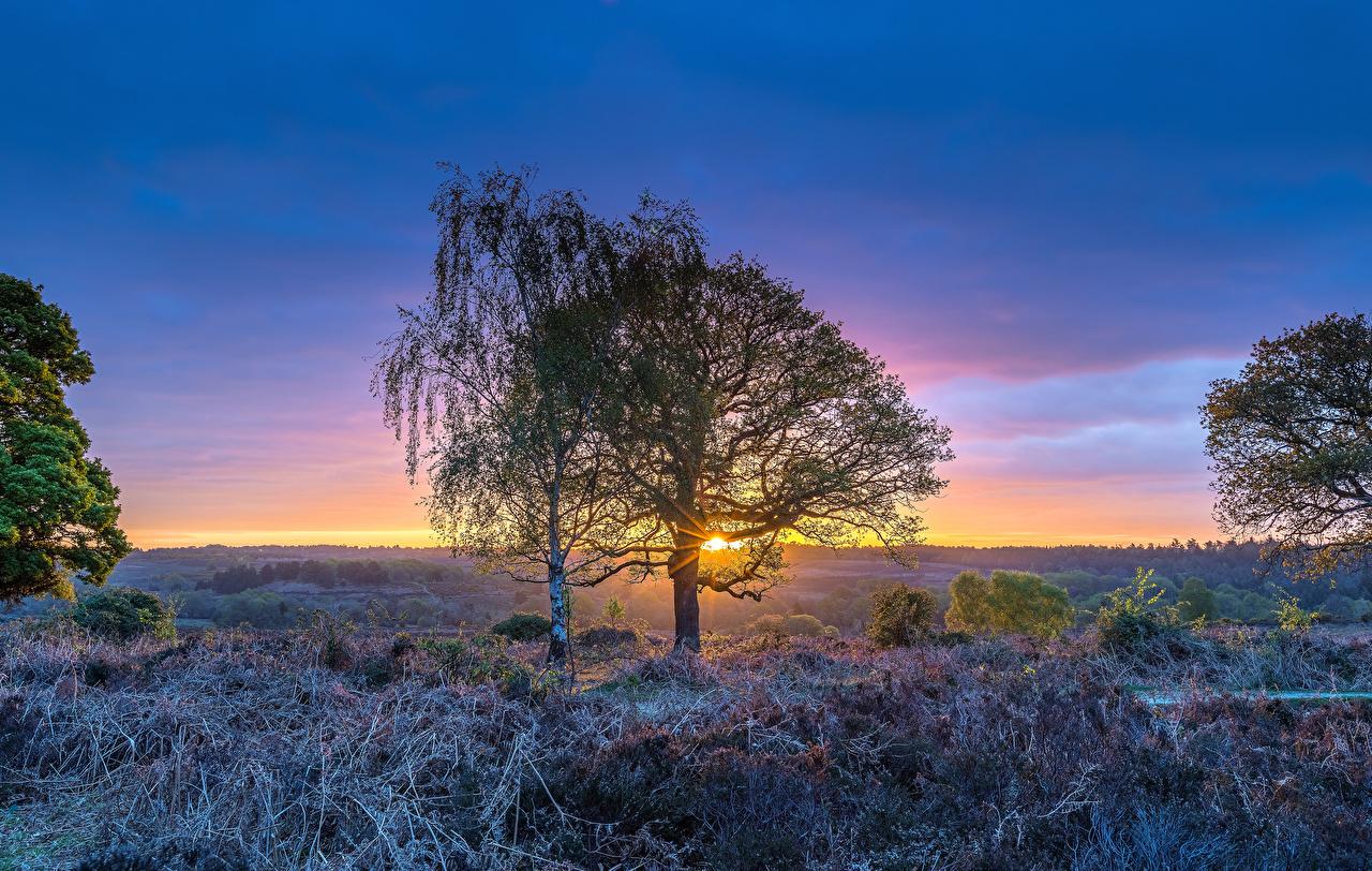 Обои Лучи света Англия Rockford Природа Рассветы и закаты Трава Деревья