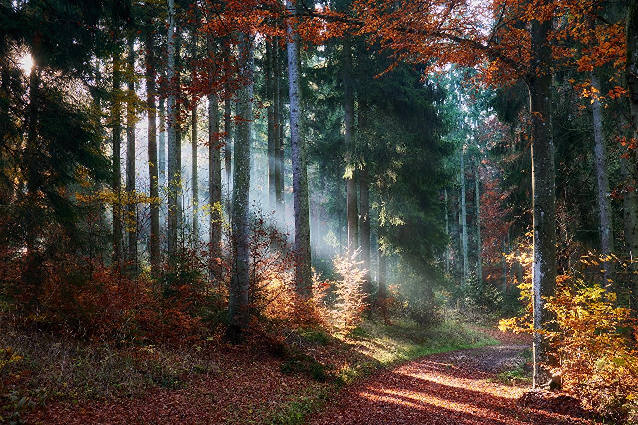 Фотографии Лучи света Листья осенние Природа тропинка Леса дерево лист Листва Осень Тропа тропы лес дерева Деревья деревьев