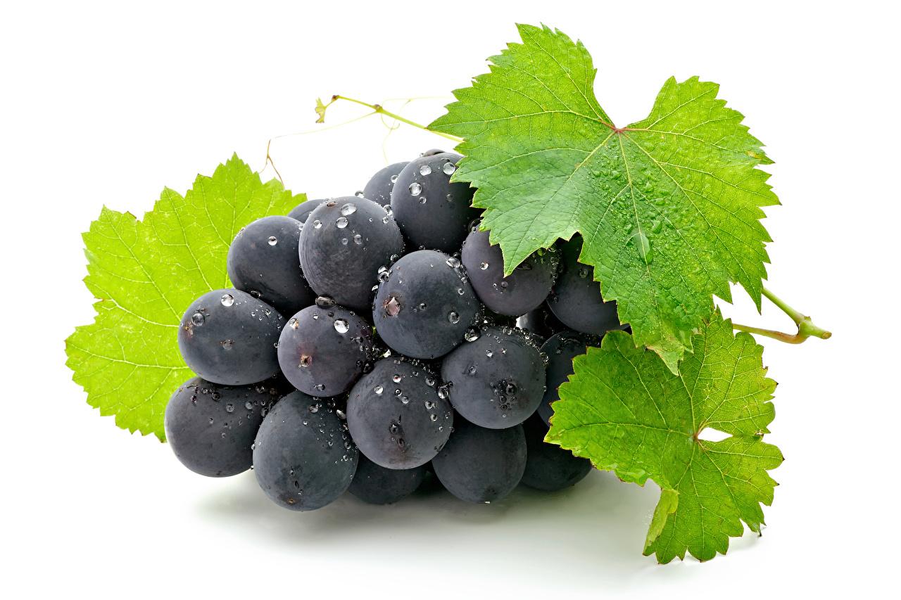 Картинка Листья Виноград Пища вблизи Белый фон Листва Еда Продукты питания Крупным планом