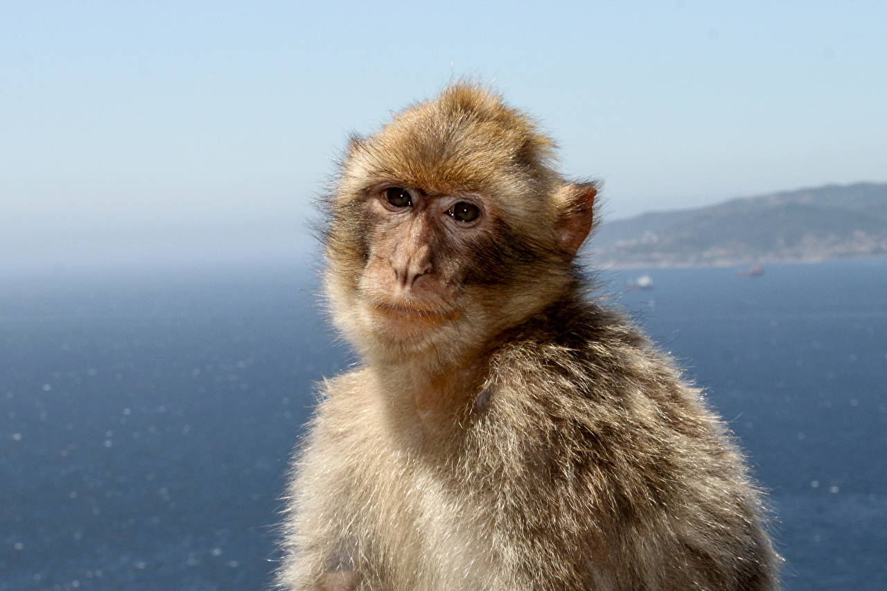 Скачать фото обезьяны новогодней