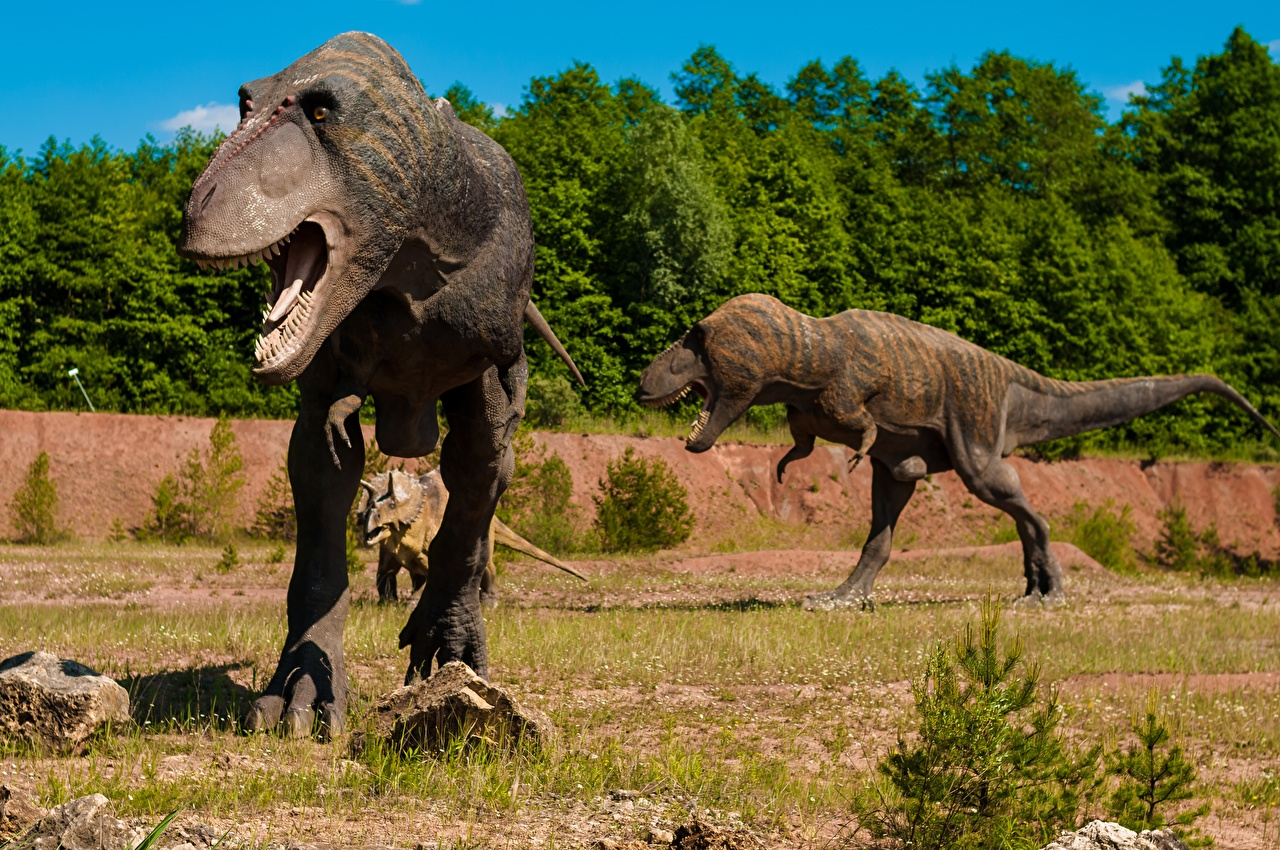 Фото Тираннозавр рекс Динозавры траве Животные Скульптуры динозавр Трава животное скульптура