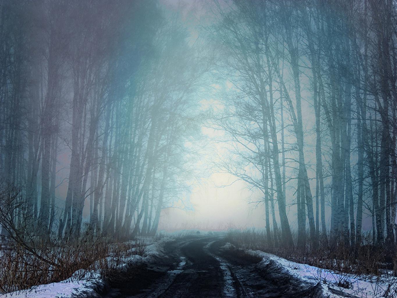 Фотография Сибирь Россия Туман зимние Природа Леса Снег Дороги Деревья Зима