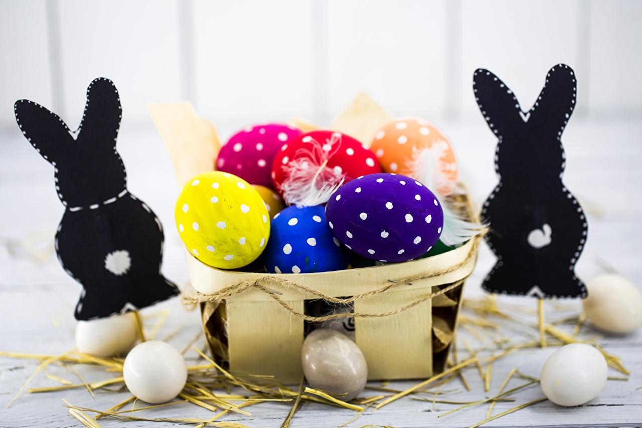 Фото Пасха Кролики Разноцветные яиц Корзинка Продукты питания кролик яйцо Яйца яйцами Корзина корзины Еда Пища