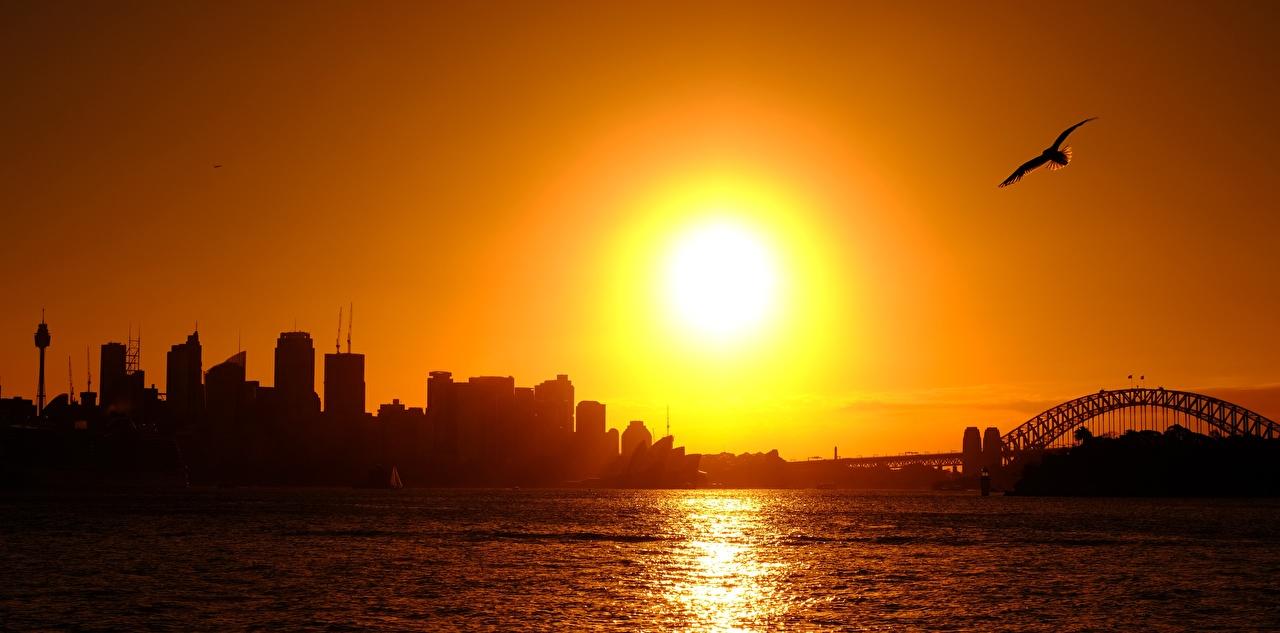 Фотография Сидней Птицы Чайка Австралия силуэты солнца рассвет и закат город птица чайки Силуэт силуэта Солнце Рассветы и закаты Города