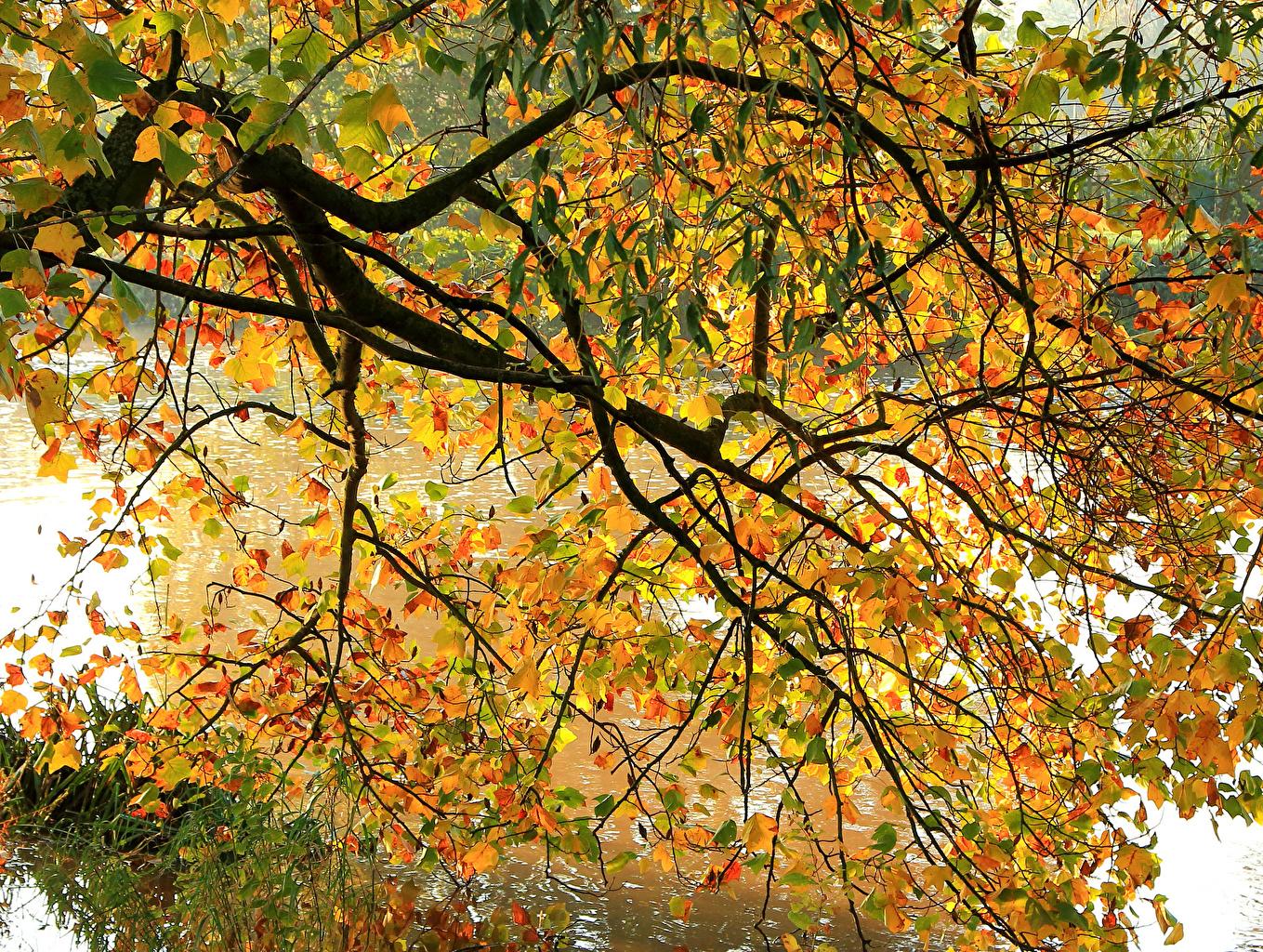 Фотография лист Природа осенние ветка Листья Листва Осень ветвь Ветки на ветке