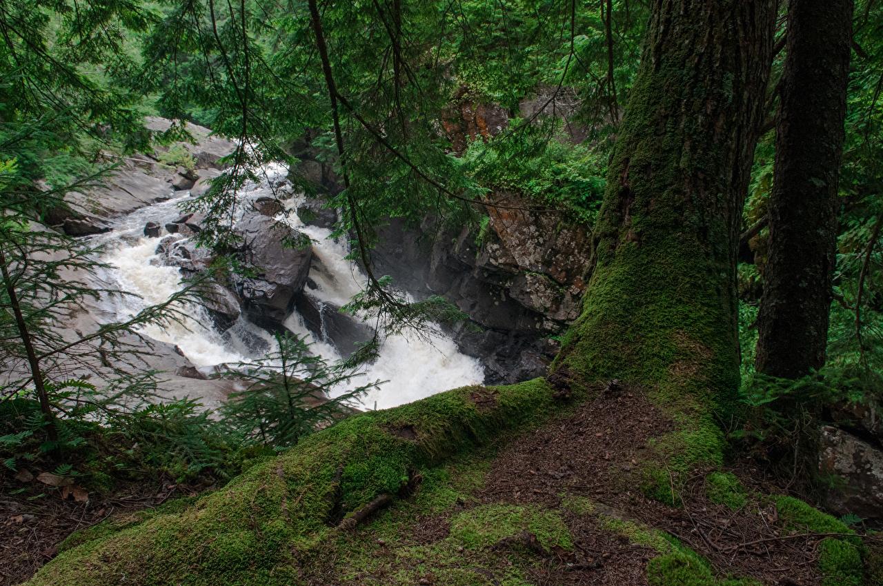 Обои для рабочего стола США Auger Falls Природа Водопады Ствол дерева мха ветвь штаты Мох мхом ветка Ветки на ветке
