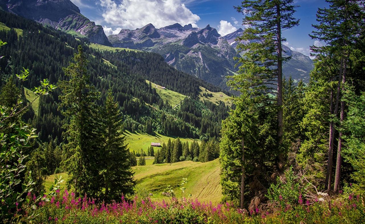 Обои для рабочего стола Альпы Швейцария Sanetschhore Горы Природа Пейзаж Трава Деревья