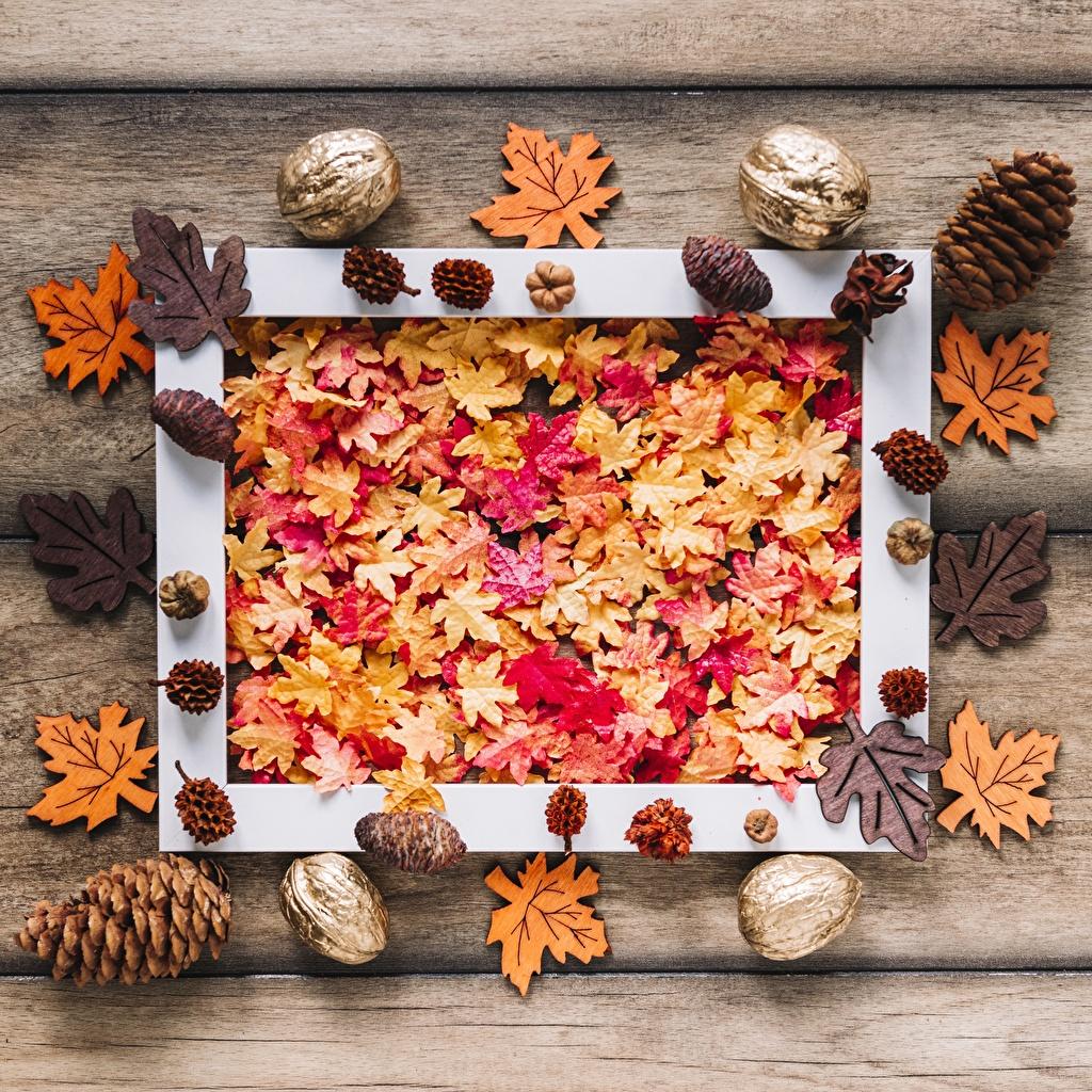 Фотография лист клёна Осень Природа Шишки Листва Листья Клён клёновый осенние шишка