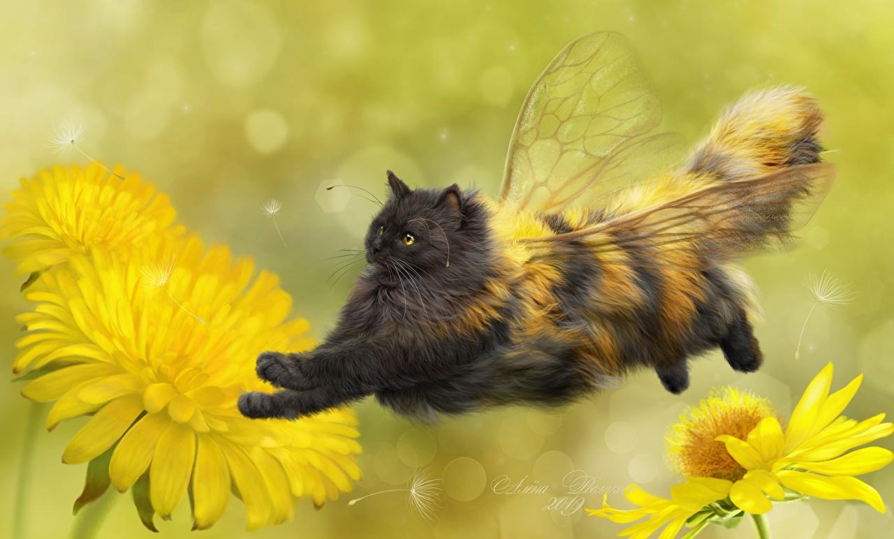 Фотографии коты Пчелы Крылья креативные Одуванчики летит Животные кот Кошки кошка Креатив оригинальные летят Полет летящий животное