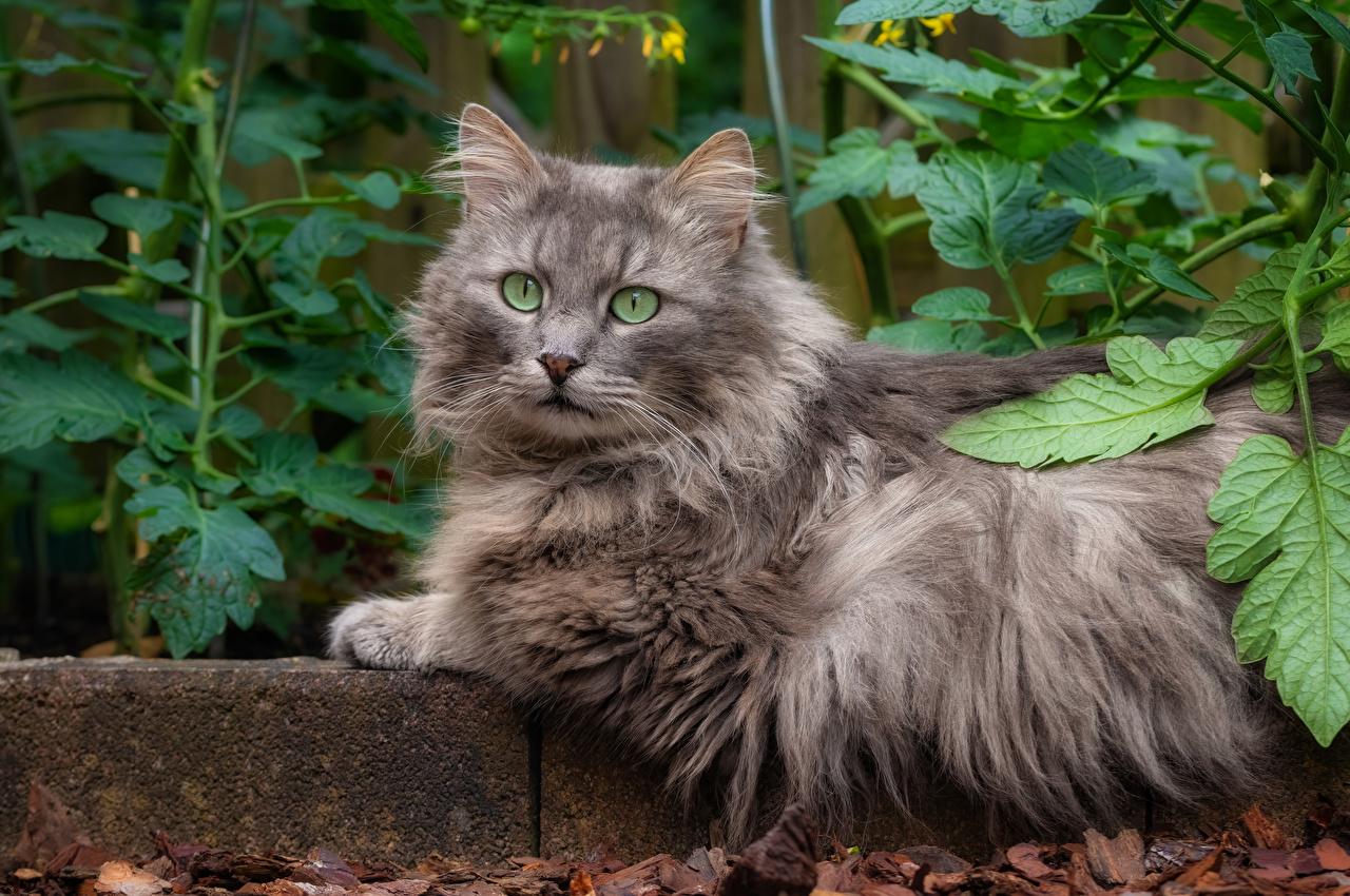 Картинки Кошки на ветке смотрят Животные кот коты кошка ветвь ветка Ветки Взгляд смотрит животное