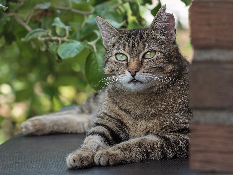 Картинки кошка лежа Лапы Города Взгляд кот коты Кошки Лежит лежат лежачие лап город смотрят смотрит