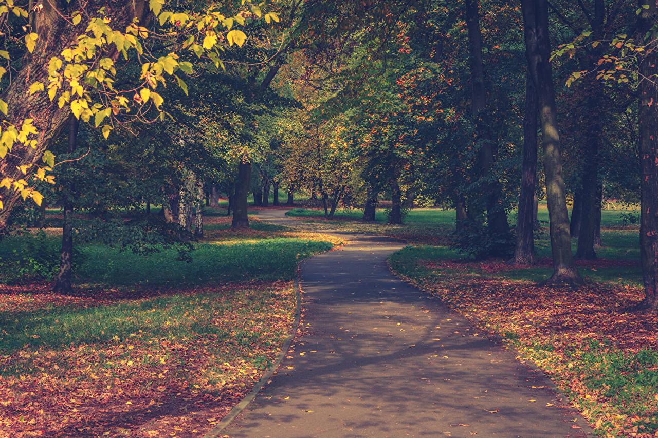 Картинка Листва Природа осенние Парки Тротуар Деревья Листья Осень