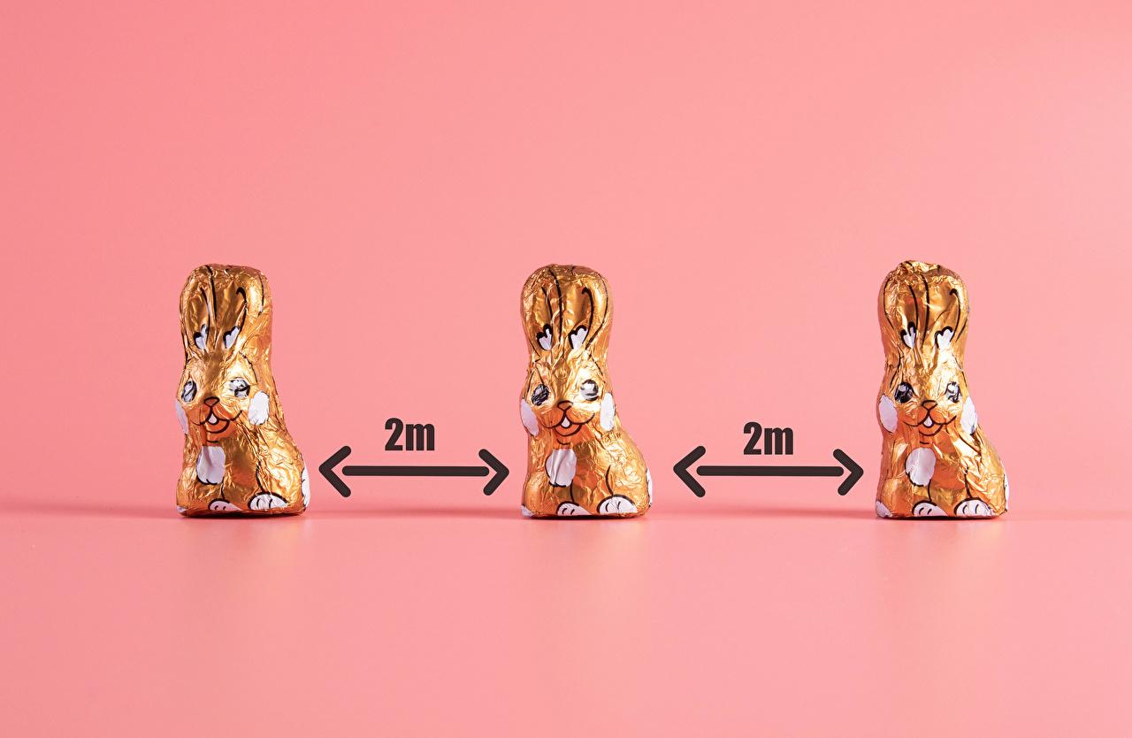 Фотография Пасха кролик Коронавирус Шоколад цветок три Цветной фон Кролики Цветы Трое 3 втроем