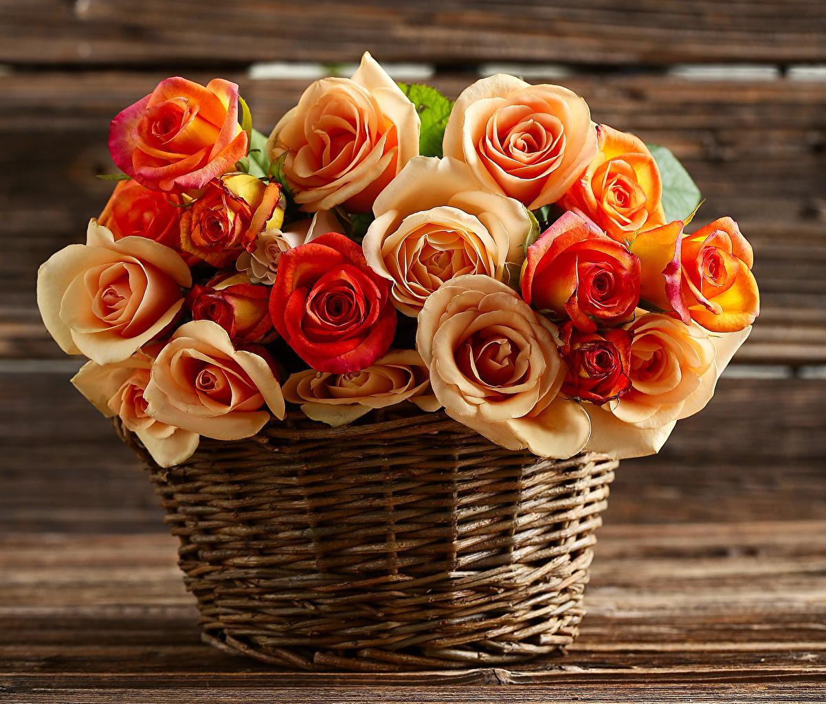 Обои для рабочего стола роза цветок корзины Крупным планом Розы Цветы Корзина Корзинка вблизи