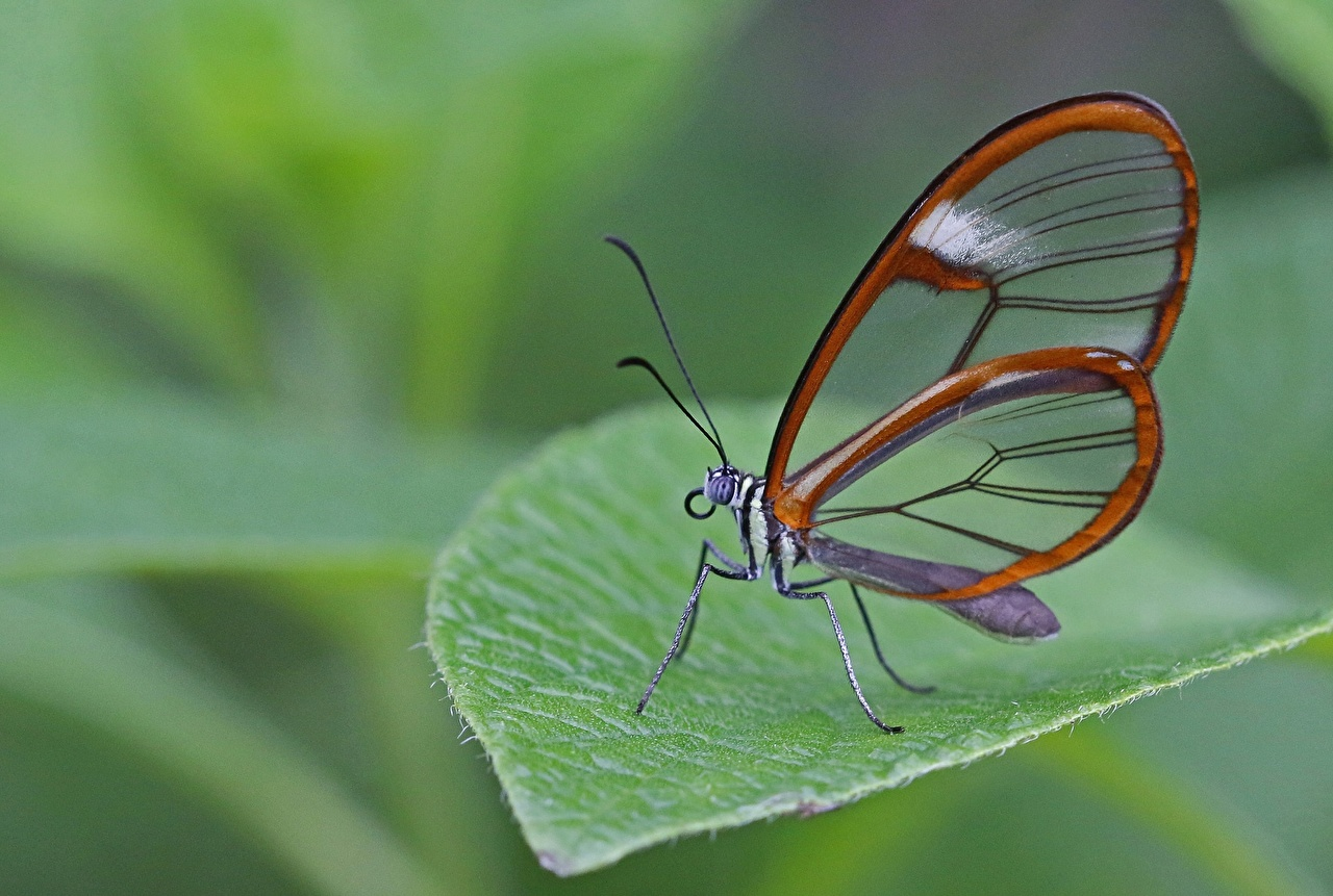 Картинки бабочка Животные Крупным планом Бабочки вблизи животное