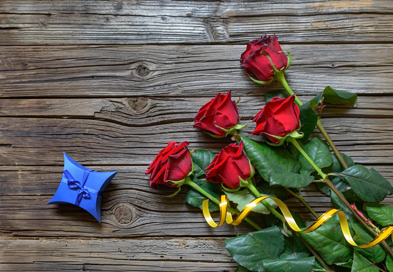 Фотография роза Красный цветок подарков Доски Розы красных красная красные Цветы Подарки подарок