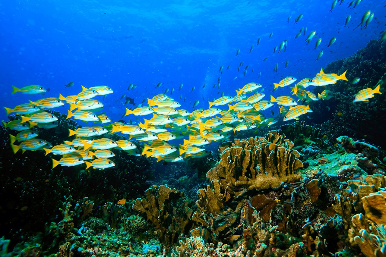 Фотография Рыбы Подводный мир Кораллы Природа