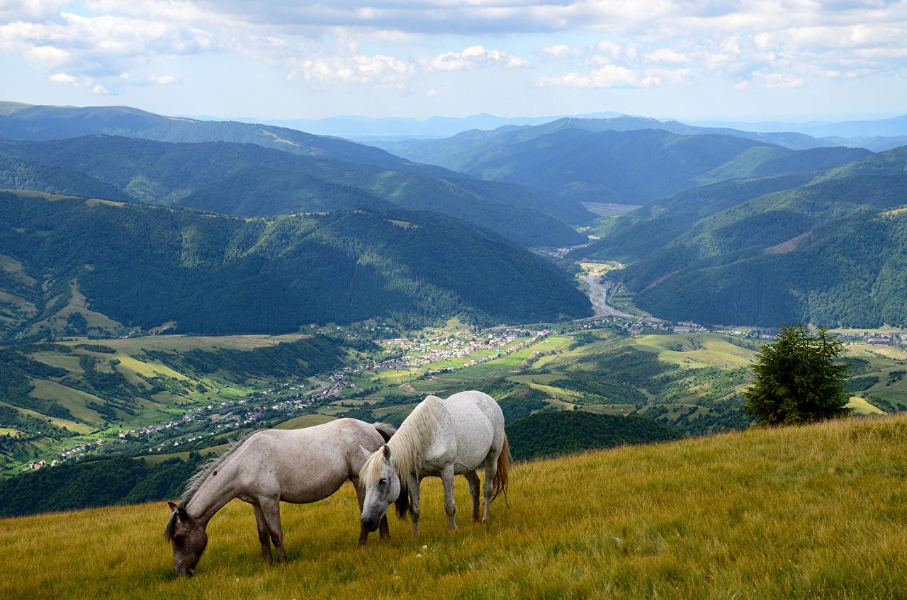 Картинка Лошади два гора Природа Луга Пейзаж Животные лошадь 2 две Двое Горы вдвоем животное