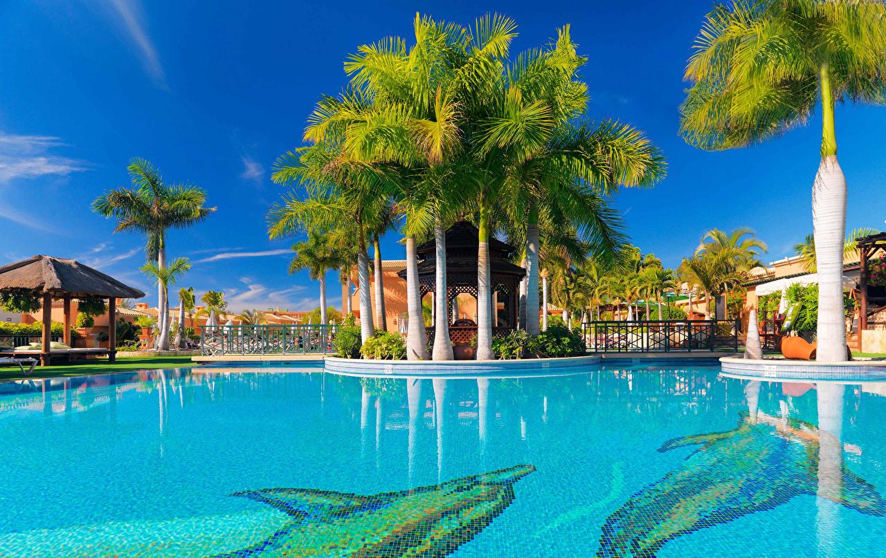Фотографии Канары Испания Курорты Бассейны Tenerife Пальмы город канарские острова Плавательный бассейн пальм пальма Города