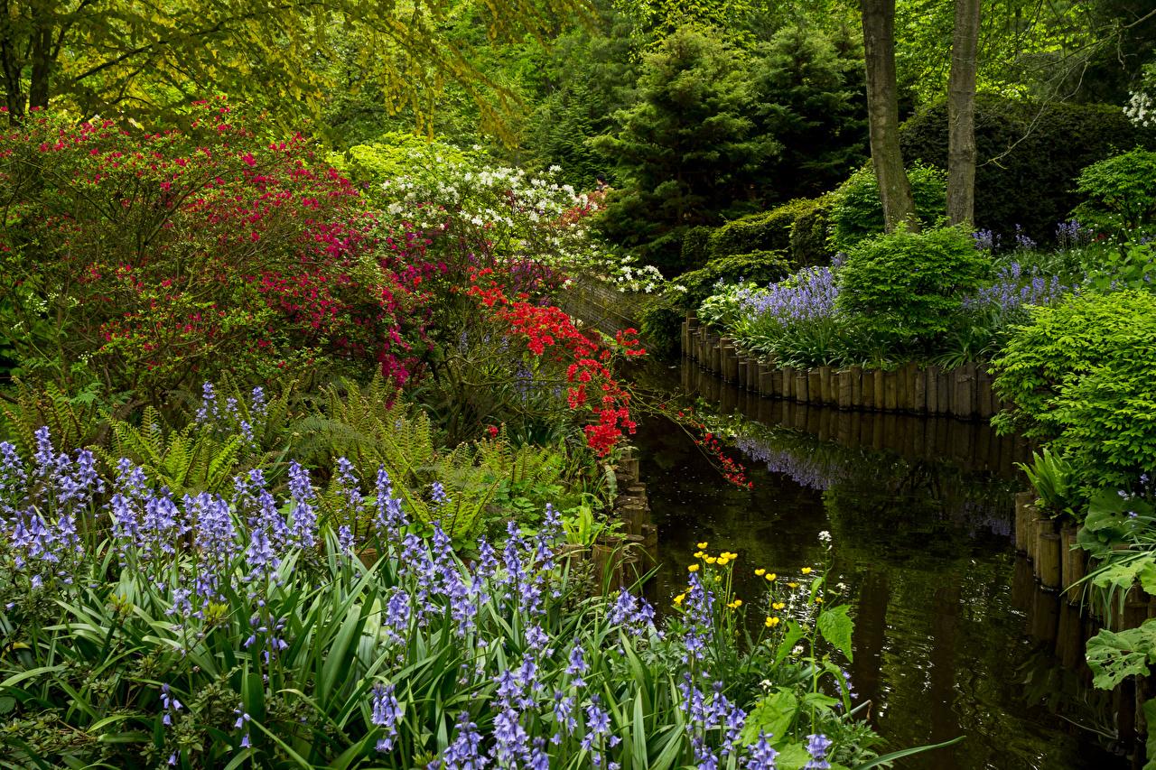 Фото Нидерланды Keukenhof Gardens Природа парк Пруд Колокольчики - Цветы Кусты голландия Парки кустов